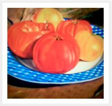 tomates_peq