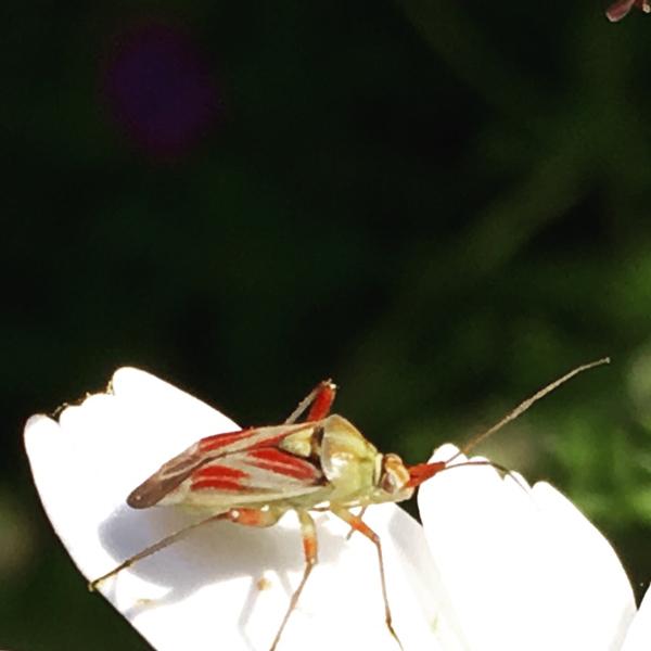 insectos_grande